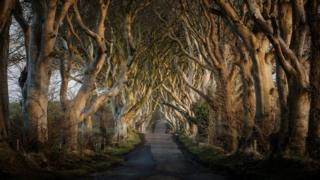 _87995296_darkhedges