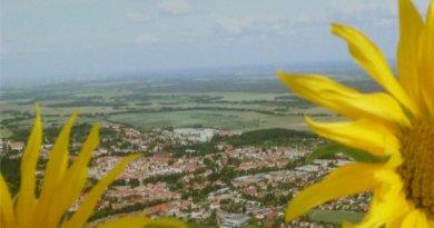 Sonnenblumen über Luckau