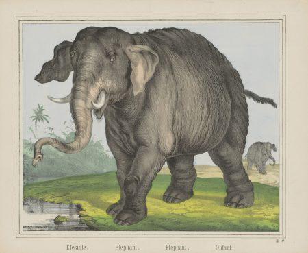 Reize niemals einen Elefanten – Über das Prokrastinieren