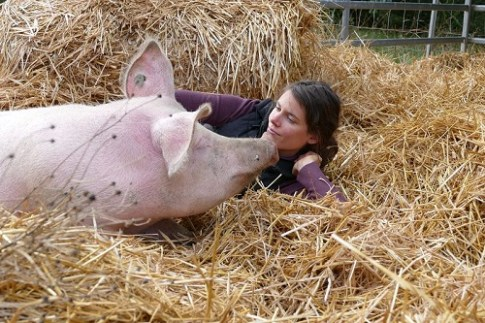 schweinestreicheln-verein-happy-pigs-and-friends-travel-with-heart