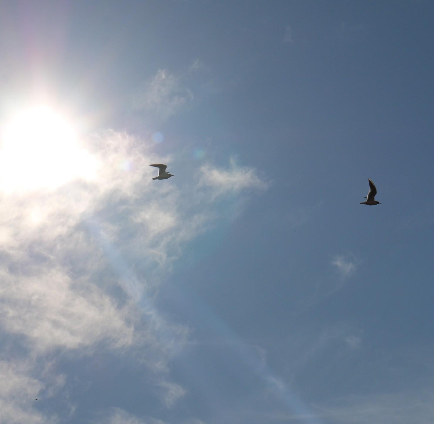 Himmel mit Möven