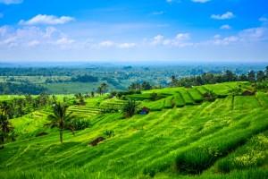 Indonésie bali ubud rizière icietlabas blog voyage blogvoyage