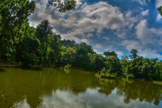 Deux semaines en Indonésie monkey sacred forest forêt sacrée des singes indonésie bali blogvoyage blog voyage