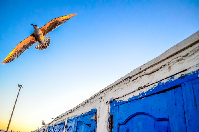 Essaouira maroc rempart toit