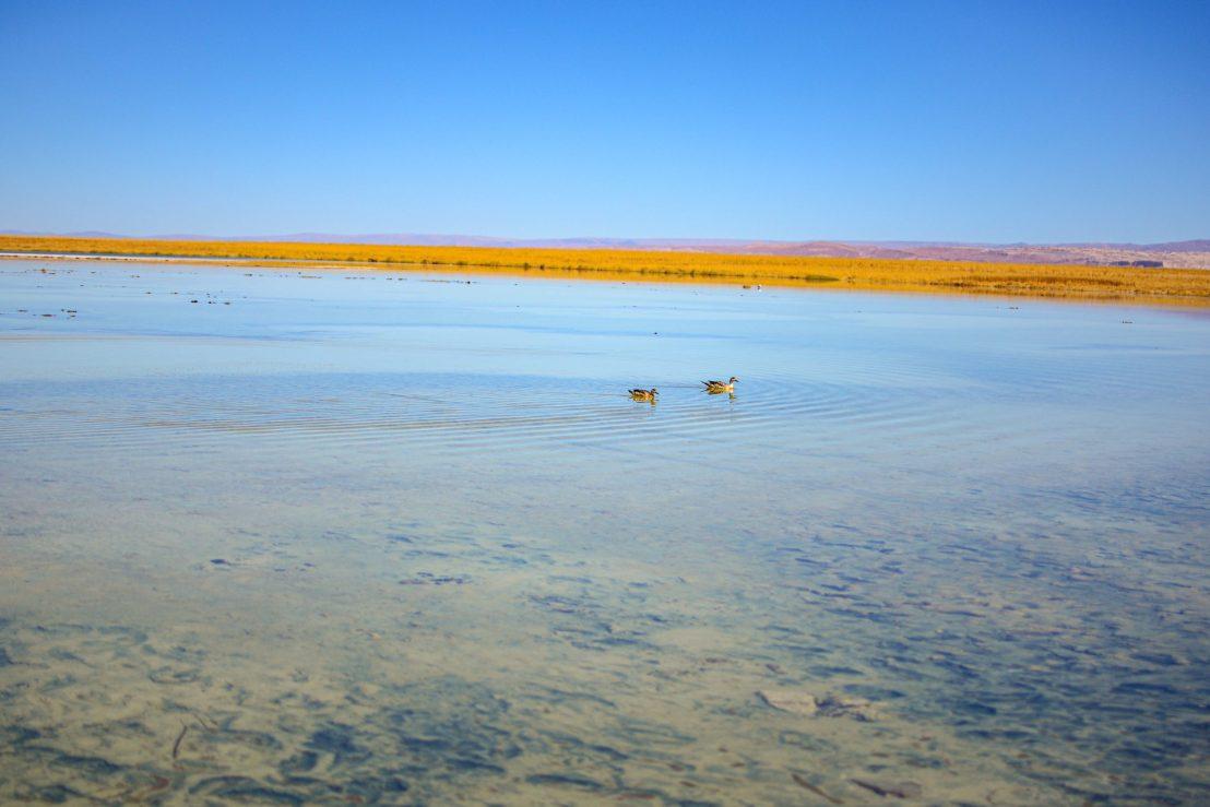 Laguna Cejar blog voyage nord du chili