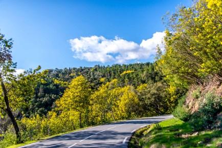 côte d'azur Alpes maritimes route du mimosa Madelieu-la-napoule Bormes les mimosas Tanneron