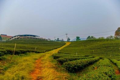 champ de thé maesalong mae salong thailande blog voyage blogvoyage icietlabas (8)