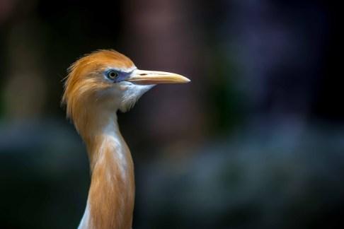 Kuala Lumpur Bird Parc Malaisie blog voyage icietlabas
