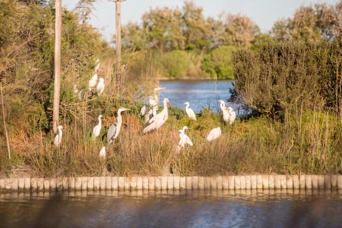 Aigues-Mortres Parc Ornithologique Camargue Provence blog voyage icietlabas-46