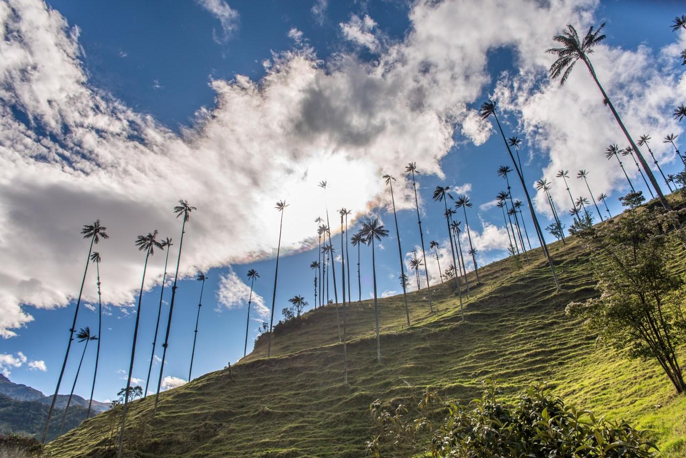 Vallée de la Cocora Salento Colombie Blog Voyage