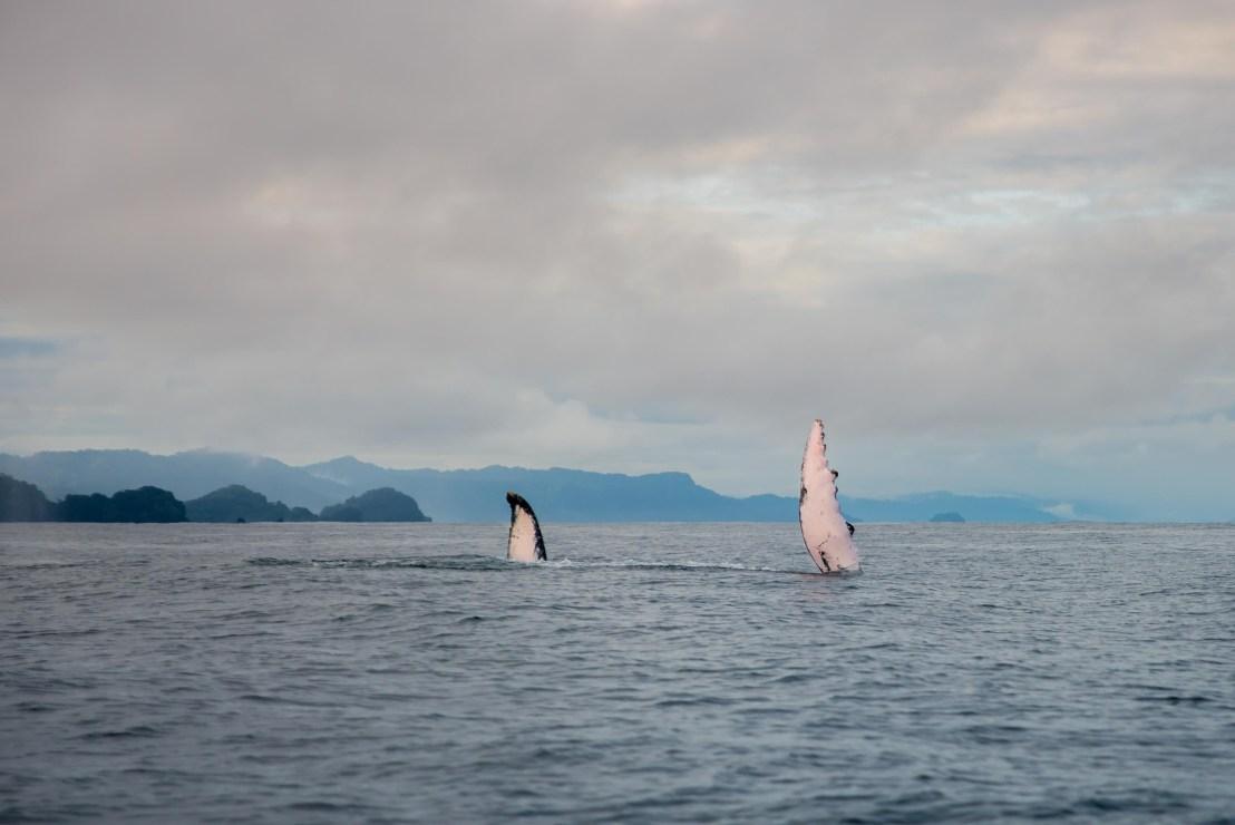 Baleines Utria Blaya Bianca El Valle Bahia Solano Blog Voyage