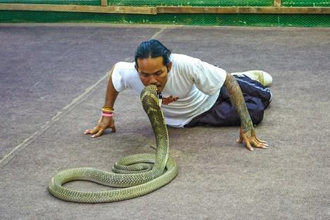 Ferme à Reptiles Koh Samui Thaïlande Blog Voyage-21