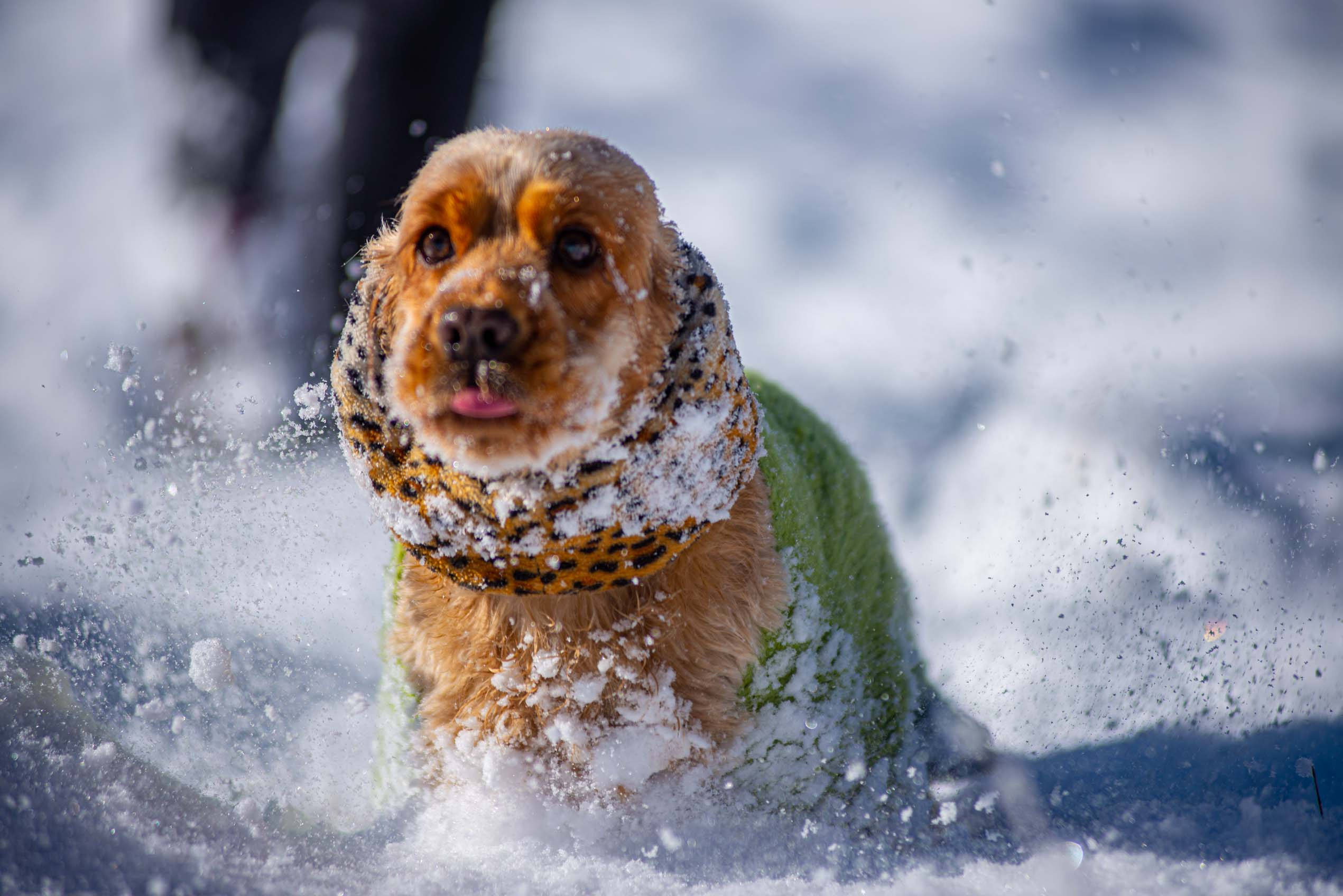 Caussols sous la neige, premières neiges dans les alpes maritimes décembre 2020 blog voyage