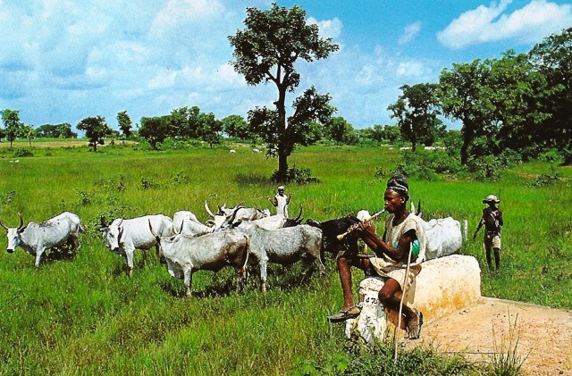 Image result for pictures of fulani cattle rearers