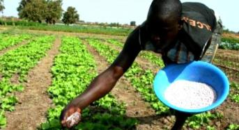20,000 People To Be Employed In Sokoto Fertilizer Plant