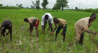 Borno farmlands deserted after Boko Haram's beheading of two farmers