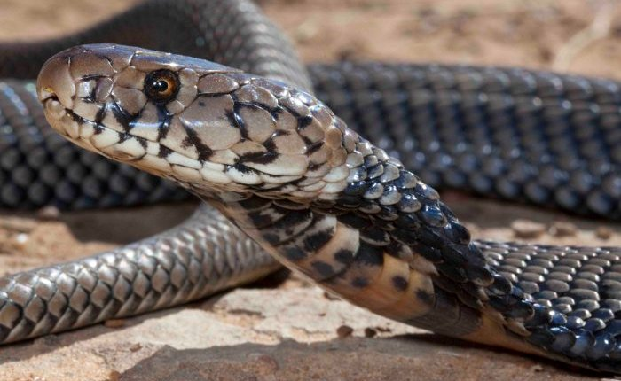 Picture of a snake for illustrative purposes. Photo credit: Google/African Geographic