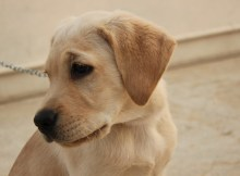 Dog Training Tips and Commands