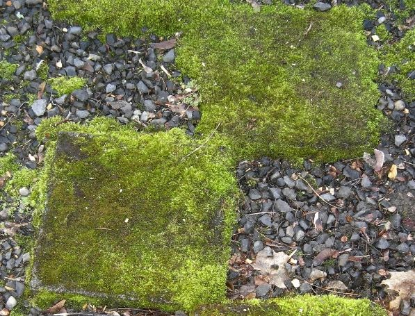 Balmer Moss Covered Stepping Stones