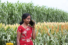 A woman farmer seeks information on her Phablet