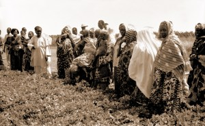 A women's farmers day at the ICRISAT Sahelian Center in 1993.