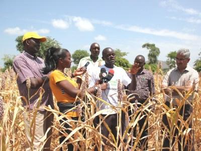 L-R: Dr Eric Manyasa, ICRISAT, Kendi Njeru (Royal Media services), Mbogo, County Agricultural Officer, Chiakariga Ward, Shadrack Kithome, Mutai, ICRISAT and Dr Ganga Rao, ICRISAT.