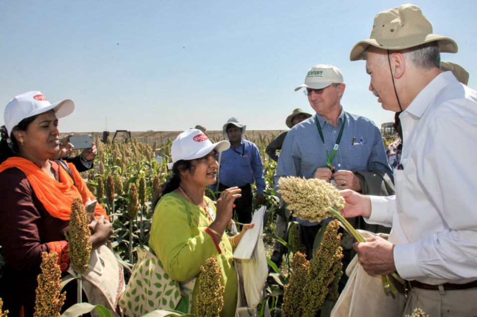 Participants at the Sorghum Field Day organized at ICRISAT-India. Photo: PS Rao, ICRISAT