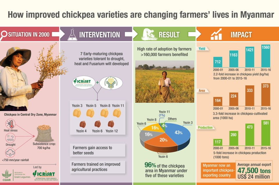 How improved chickpea varieties are changing farmers' lives in Myanmar