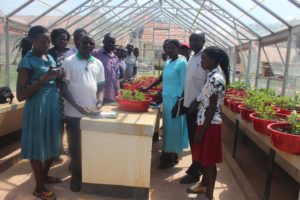 Demonstration of emasculation and crossing processes at the glass house. Photo: ICRISAT