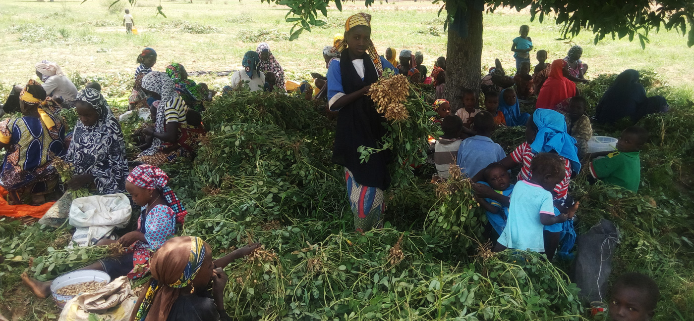 Women and children involved in farm activities in the groundnut chain. Women and children involved in farm activities in the groundnut chain.
