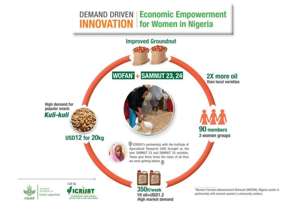 An example of ICRISAT's demand-driven innovation in Nigeria: Oil-rich groundnut varieties (Samnut 23, 24) have increased prosperity, provided employment, and proven instrumental in empowering women (Source: ICRISAT).