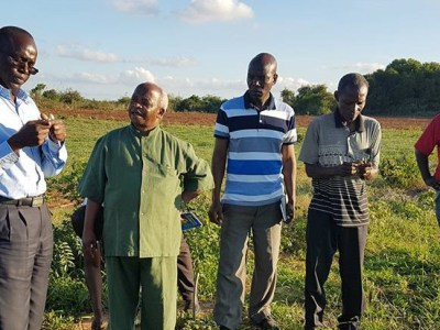 Dr Chris Ojiewo visiting the groundnut field trials together with researchers from Naliendele Agricultural Research Institute, led by Dr Omari Mponda. Photo: C Ojiewo.