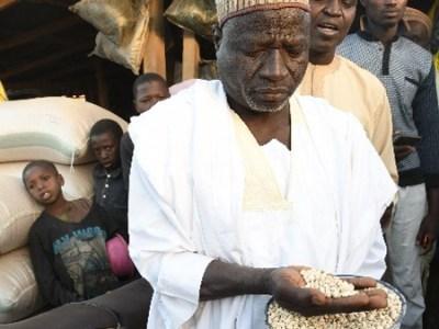 A scene in Dawanu grain market, Kano, Northern Nigeria, the largest cowpea market in the world. Photo: A. Diama