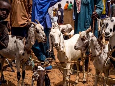 Livestock market in Niger Photo: Andre F.van Rooyen, ICRISAT