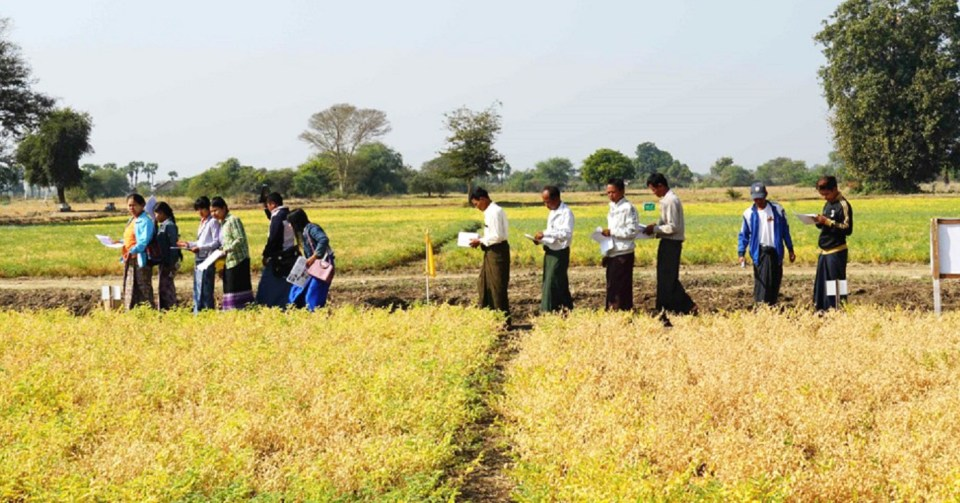 Farmers at Zaloke Reserach Farm inspecting chickpea varieties. Photo: ICRISAT