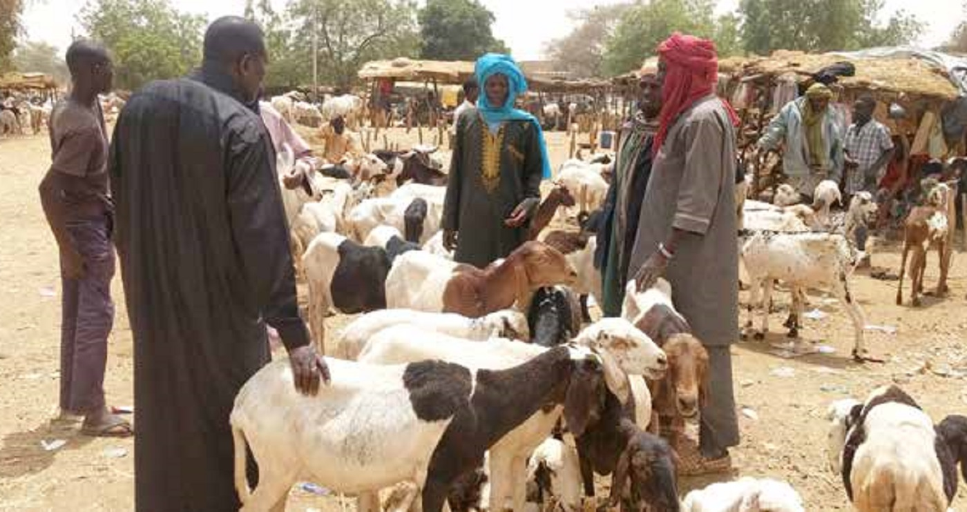 A livestock market in Niger. A group of scientists from ILRI, CIRAD and ICRISAT recently met farmers to discuss ways for boosting livestock productivity in the West African nation. Photo: ICRISAT