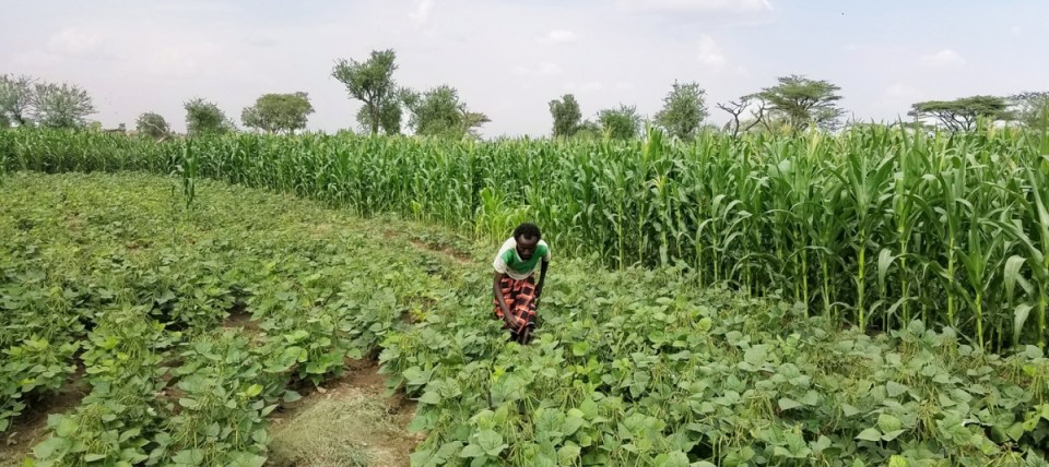 A new farm in Chifra, Afar. Photo: Tilahun Amede, ICRISAT