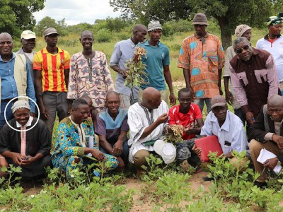 Producers and farmers of the Sabunyuma cooperative in the Kayes region with ICRISAT and IER staff. Farmer Daba Kane (circled in white in the picture). Photo: Magassa M, ICRISAT