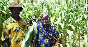 Malian farmers during a field visit before COVID-19-mandated lockdown. Photo: A Diama, ICRISAT