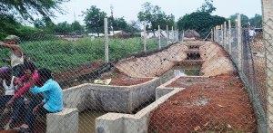 Hybrid wastewater treatment wetland. Photo: ICRISAT