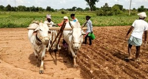 Sowing demonstration at Wanaparthy. Photo: ICRISAT