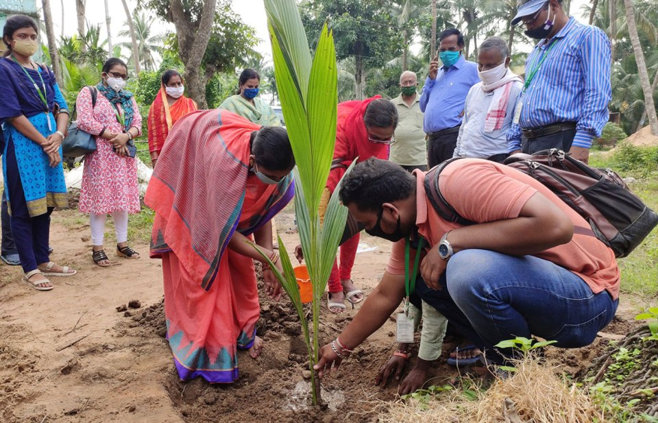 Chairman, Panchayat Samiti, Satyabadi block, Puri (left) planting coconut on the occasion of World Coconut Day. Photo: ICRISAT