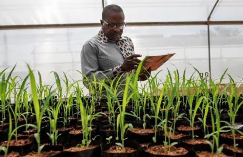 Regional Crop Improvement Hub in West and Central Africa.