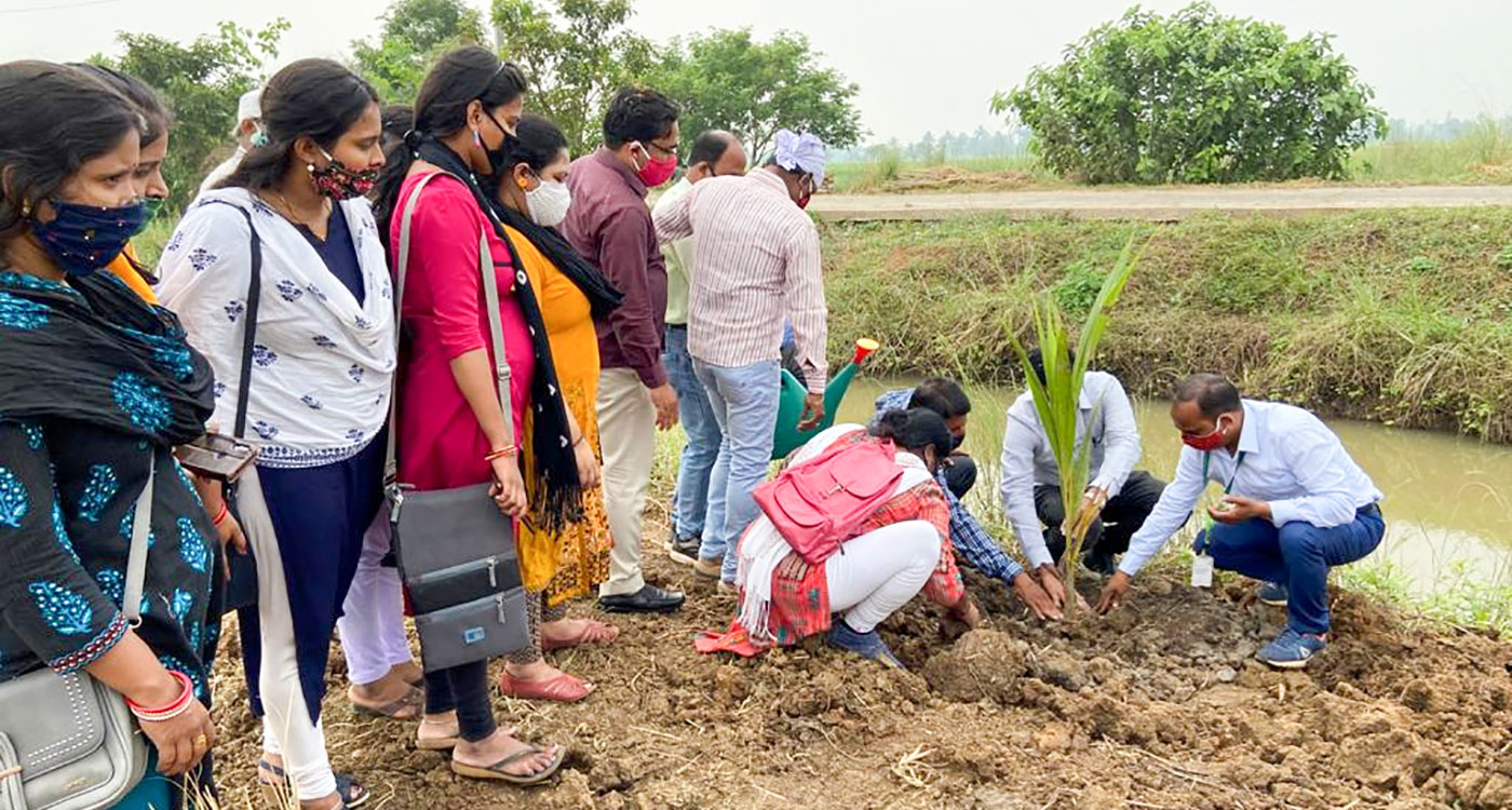 A coconut sapling being planted at Kulintira village in Khordha district, Odisha. Photo: Ramvikash Verma, ICRISAT.