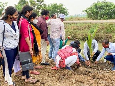 A coconut sapling being planted at Kulintira village in Khordha district, Odisha. Photo: Ramvikash Verma, ICRISAT.