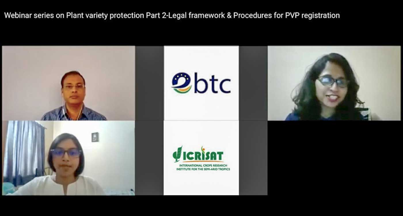 Webinar 2 on plant variety protection: (From bottom left) Dr Neeti Wilson, Partner, Anand & Anand; Dr Suryamani Tripathi, Legal Counsel, ICRISAT; and Ms Ankita Tyagi, Senior Manager IP, EBTC; discuss legal frameworks and procedures for PVP registration. Screen shot: ICRISAT
