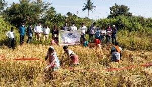 Farmers participate in the CCE in Singari village, Rayagada district. Photo: ICRISAT Development Center