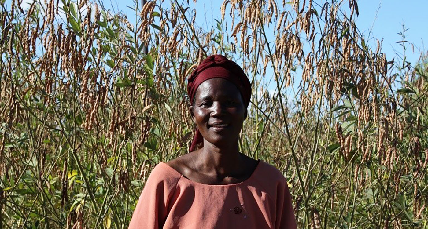 Pigeonpea is traditionally grown in Southern Malawi. Women here own land and take farming decisions. Photo: NVPR Ganga Rao, ICRISAT