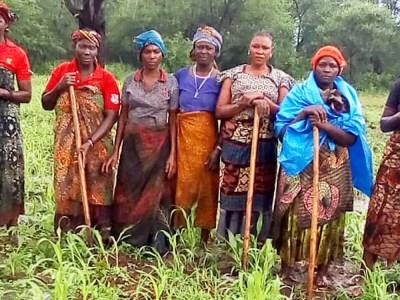 Women seed producers in the sorghum seed farm, Tanzania. Photo: A Mwalughelo, MHEG