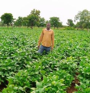 Mr Konkobo Sibiri on his seed production farm.